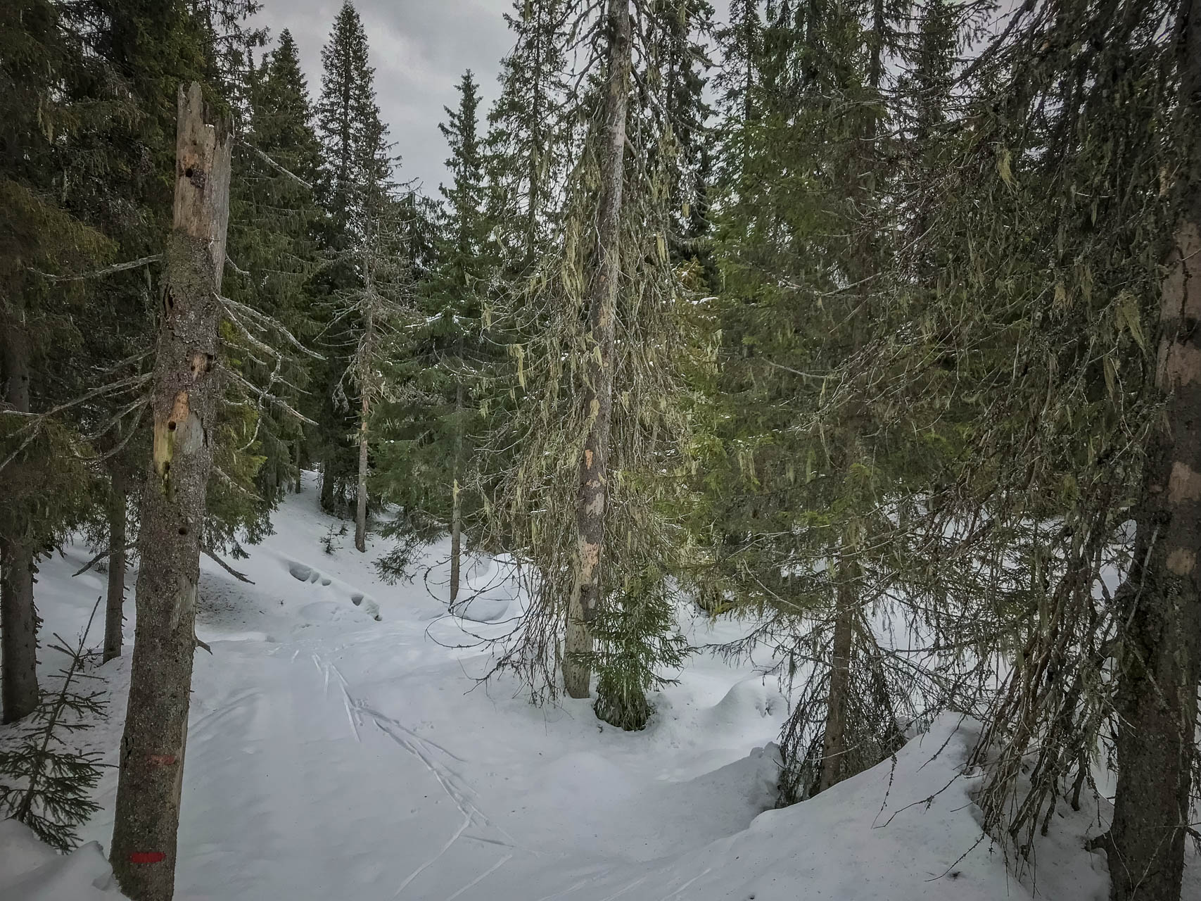 Krokskogen naturreservat