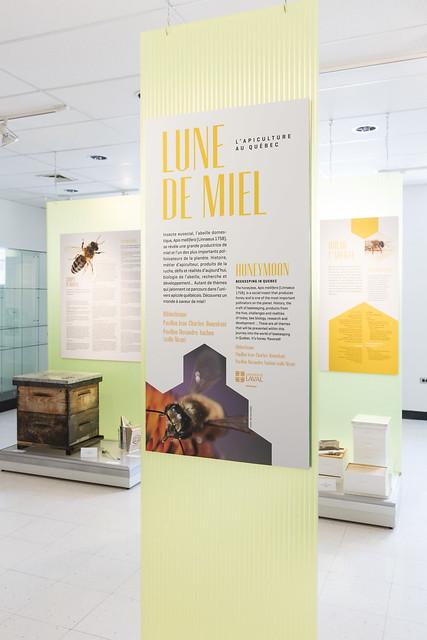 Exposition – Lune de miel – L'apiculture au Québec