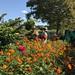 Governors Island Dye Garden
