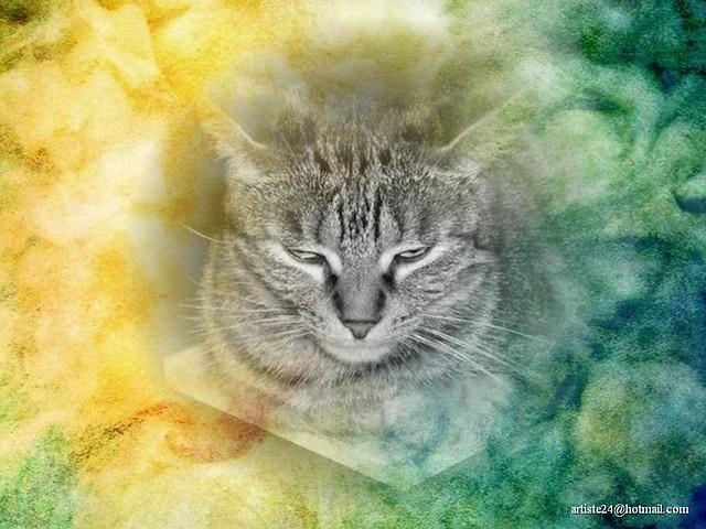 Minus Cat (4)