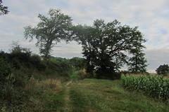 20120919 22 066 Jakobus Weg Bäume Feld