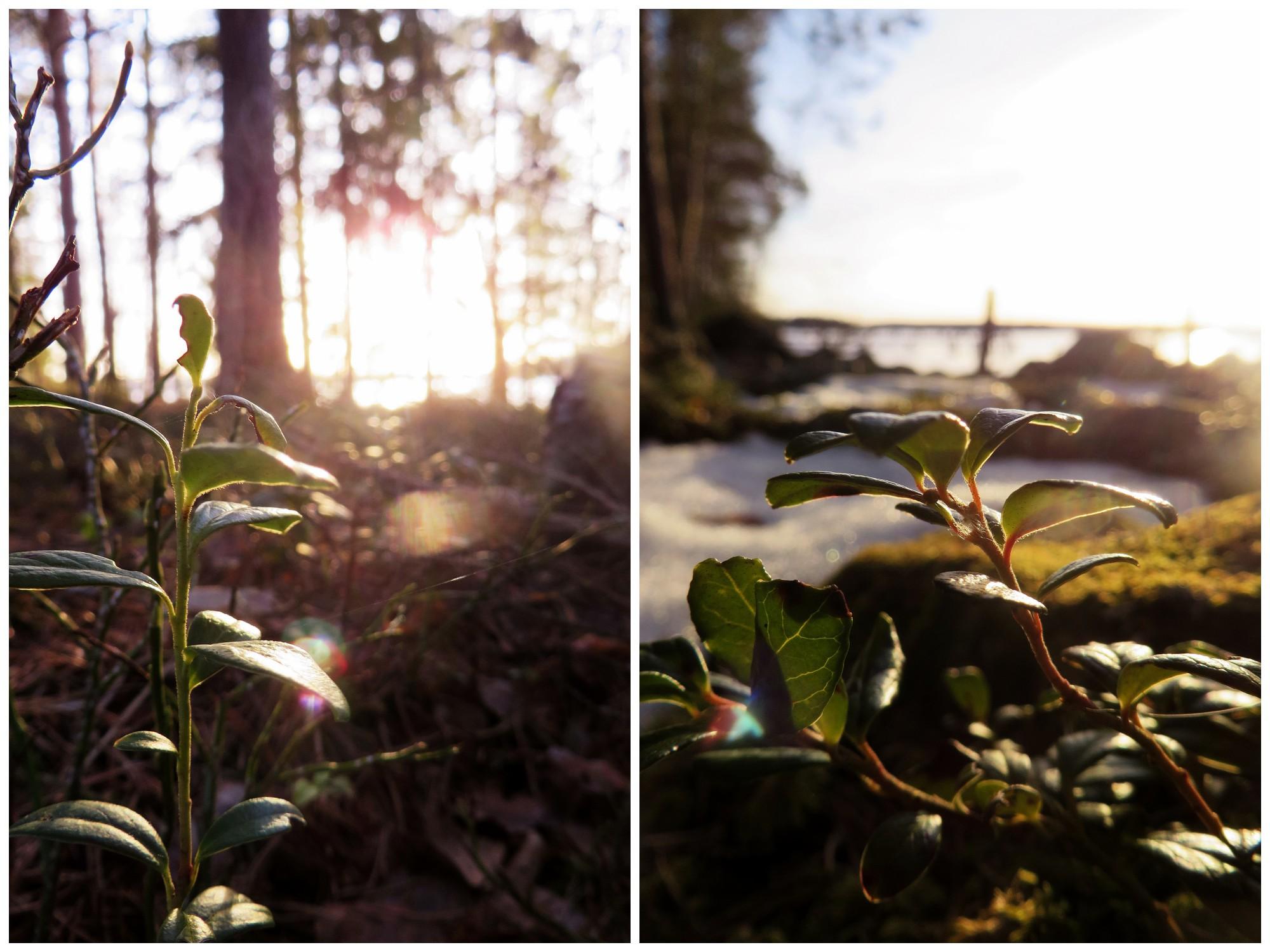kevätkuvia14