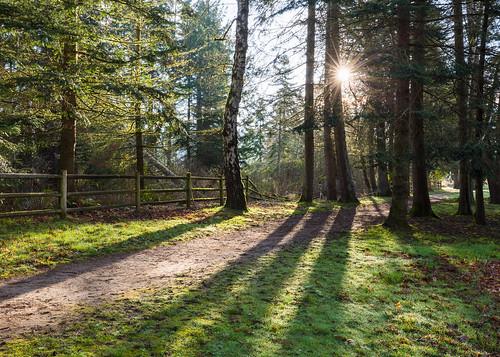 fence fencefriday nature sunrise trees path morning issaquah lakesammamishstatepark washington pacificnorthwest canoneos5dmarkiii canonef1635mmf4lis happyfencefriday hff ff johnwestrock