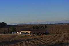 20120916 19 069 Jakobus Pyrenäen Hügel Bäume Felder - Photo of Gimont