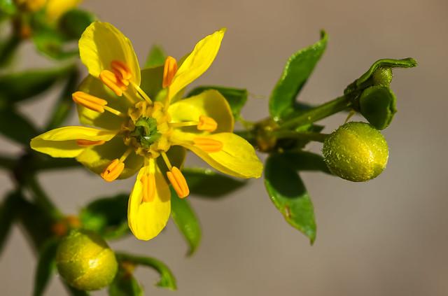 ZZZ-Wild-Flower-13_7d1_030316