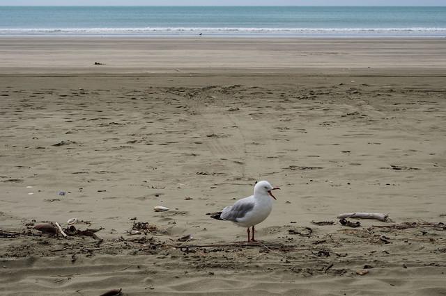 Neuseeland 2018 015 Akaroa – Christchurch-019