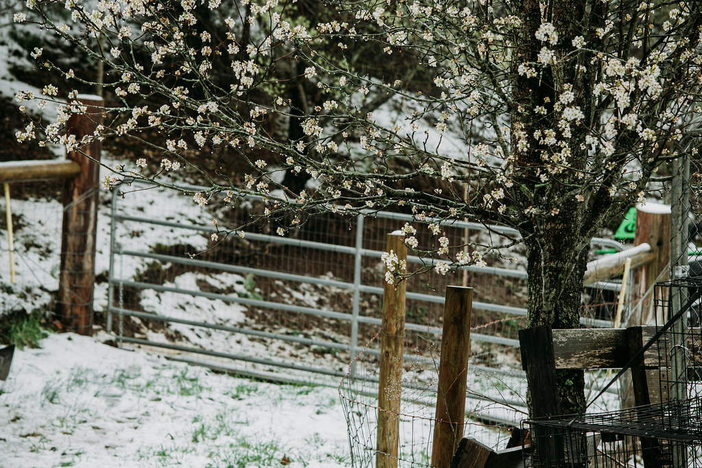 snow03242018-0862032418