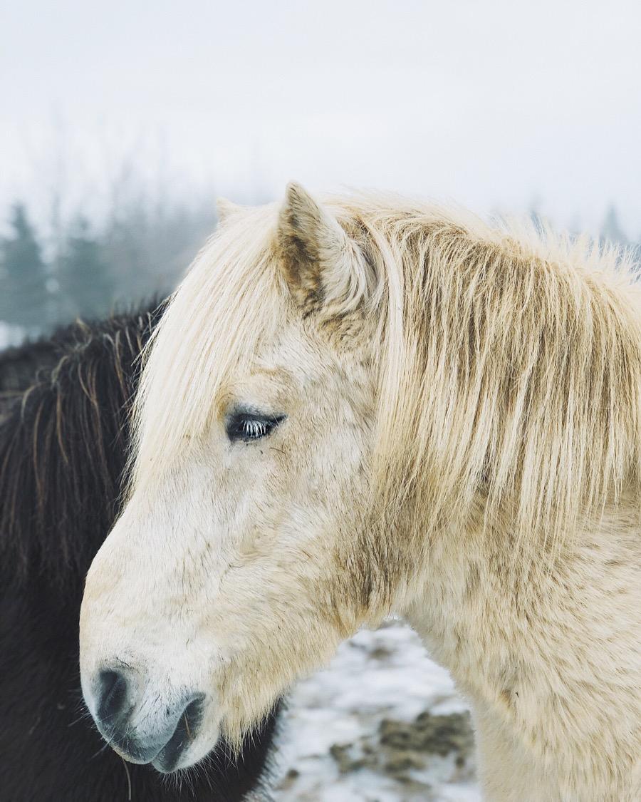 ilcarritzi_islandia_miguel_carrizo_iceland_rituals_cosmetics_white_horse_