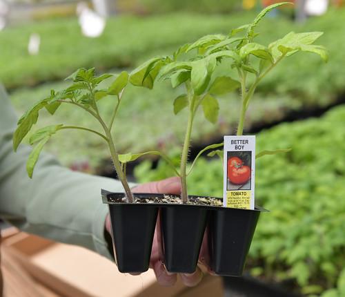 Planting Season Pointers