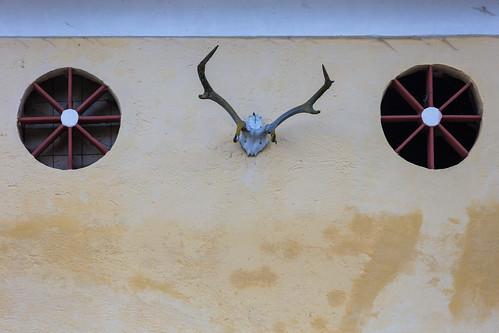 Antlers on Wheels