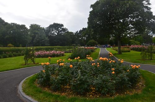 Ein Rosenbeet im Stadtgarten von Tralee