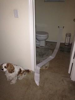 layla framed toilet paper.jpg