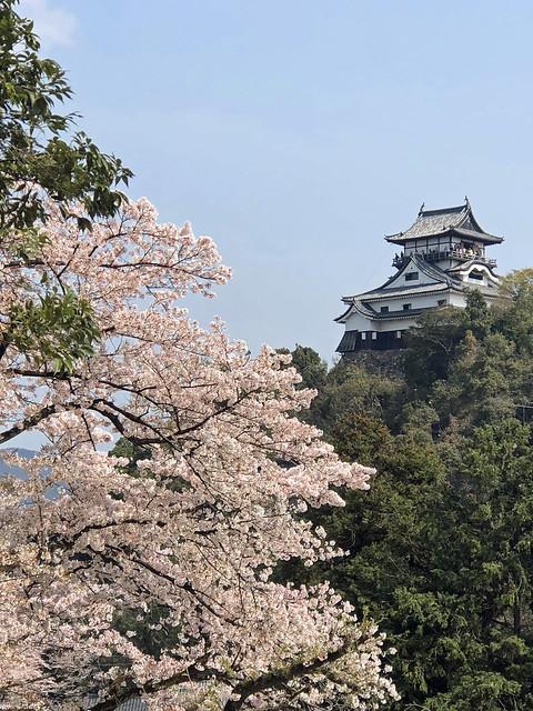 犬山城と桜 IMG_0200_2