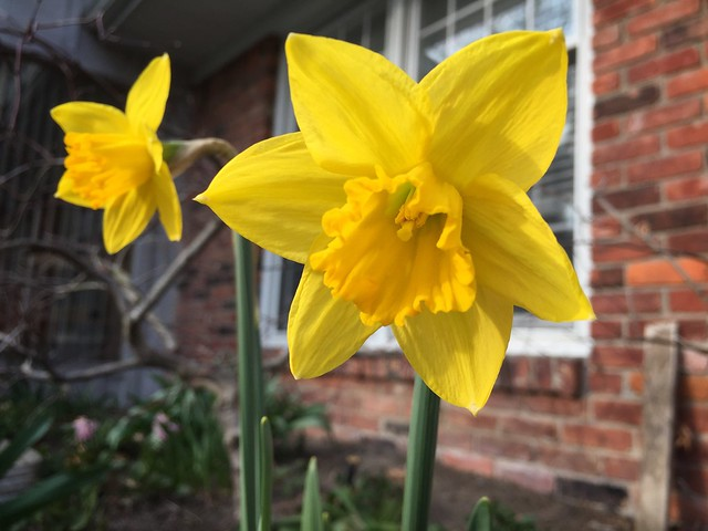 Garden Bloggers' Bloom Day: April 2018