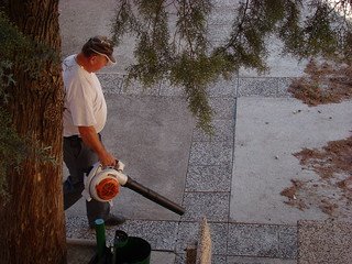 Очистка двора от хвои