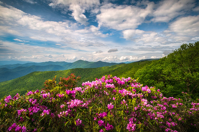 North Carolina Spring Flowers Mountain Landscape Blue Ridge Parkway Asheville NC