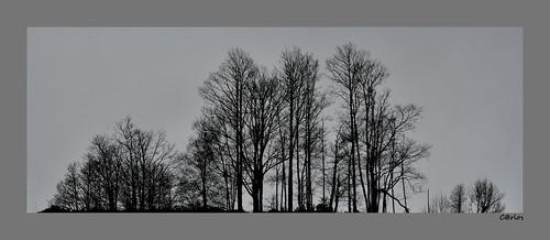 NUDE TREES