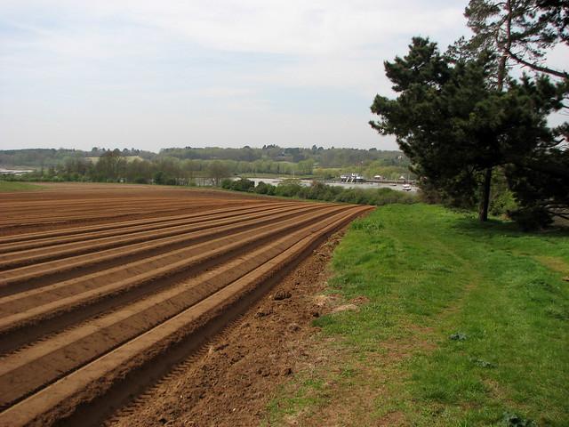 Ploughed field near Woodbridge