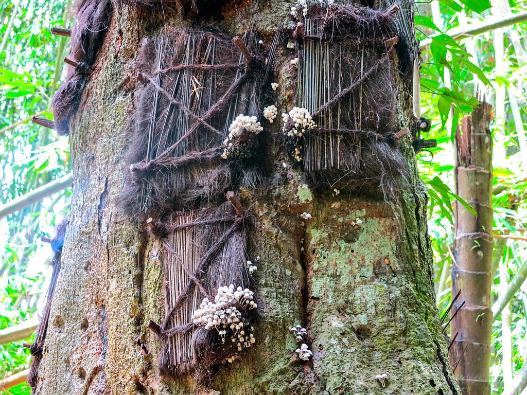 Enterramientos en Toraja