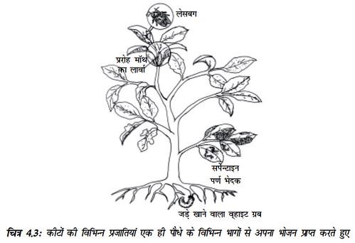 चित्र 4.3 कीटों की विभिन्न प्रजातियाँ एक ही पौधे के विभिन्न भागों से अपना भोजन प्राप्त करते हुए