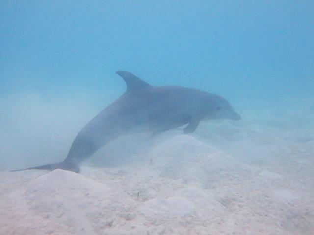 Dolphin 084