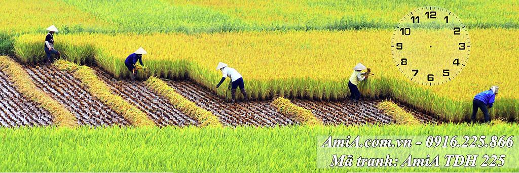AmiA 225 - Tranh người nông dân gặt lúa phong cảnh quê hương Việt Nam