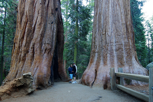 seqouia redwoods congress trail