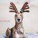 December 125th by smalldogs