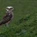 Owls. ( International Centre for Birds of Prey)
