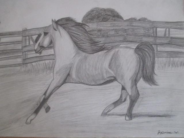 Running Horse!, Canon POWERSHOT ELPH 135