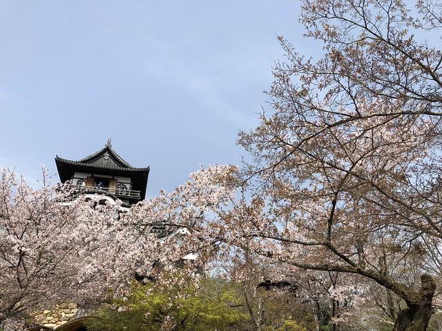 犬山城と桜 IMG_0228