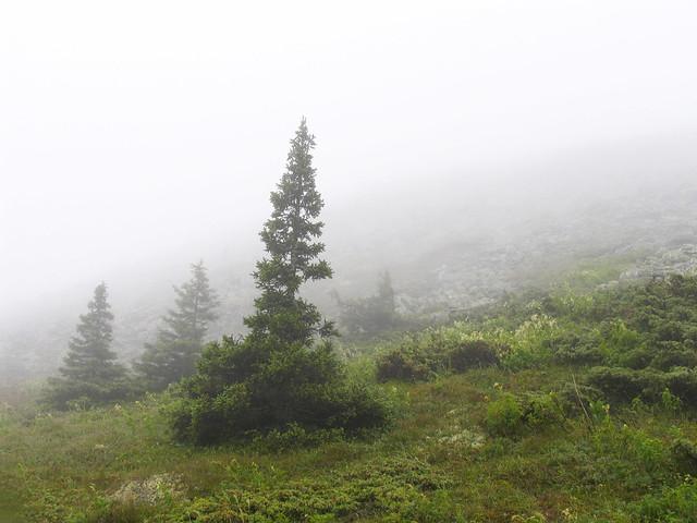 Туман у подножья Иремели, Canon POWERSHOT PRO1