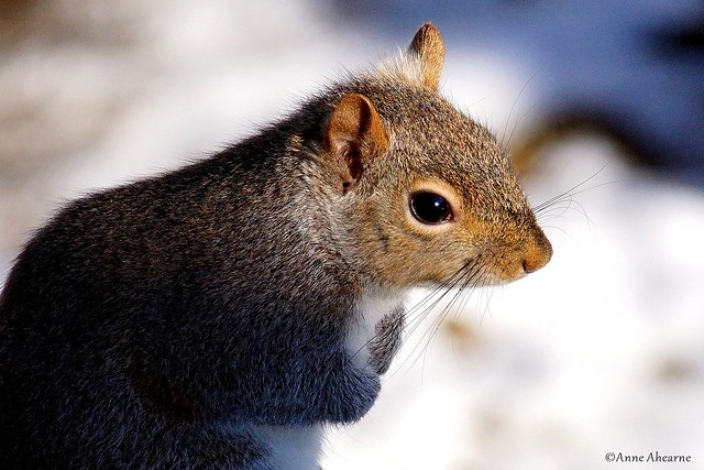 Portrait of a Squirrel in the Late Day Sun