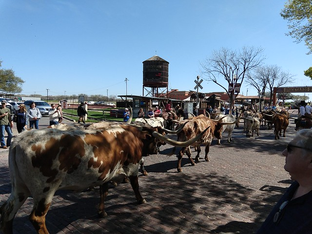 032218 FT Worth Stockyards (122)