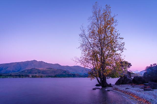 Another Wanaka Tree