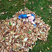 2017-10-09_144824 - Cayden in Leaves