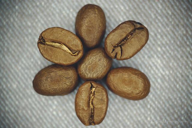 Coffeeflower - In Explore, Sony SLT-A65V, Sony DT 30mm F2.8 Macro SAM (SAL30M28)