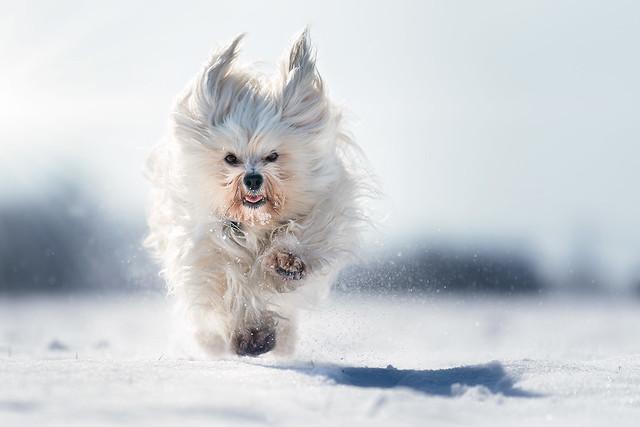 Mika im Schnee