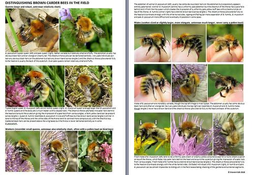 Carder Bee Crib Sheet 2