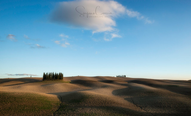 Nothing but cypresses, Canon EOS-1D X, Canon EF 16-35mm f/4L IS USM