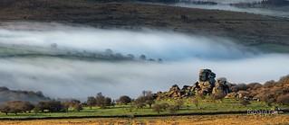 A cunning Mist