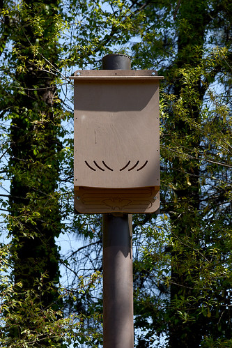 Bat house at Parents' Park near Doak Field and Lee Residence Hall.