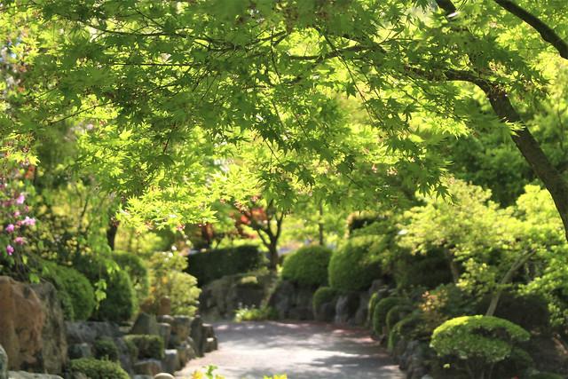 houtokuji-gosyuin04017