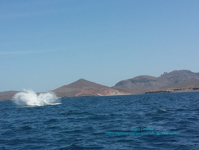 Whale watching in LaPaz Mexico