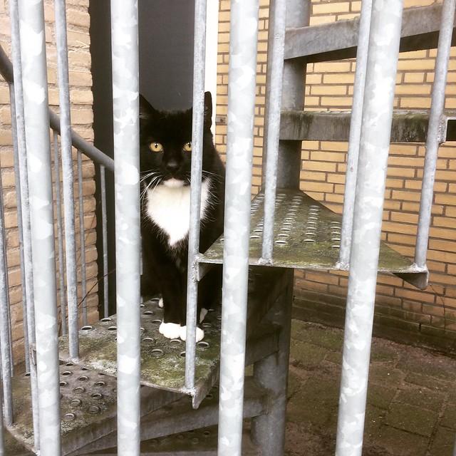 2. De verdachte - De schuldbewuste kat