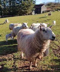 Llwynin Farm