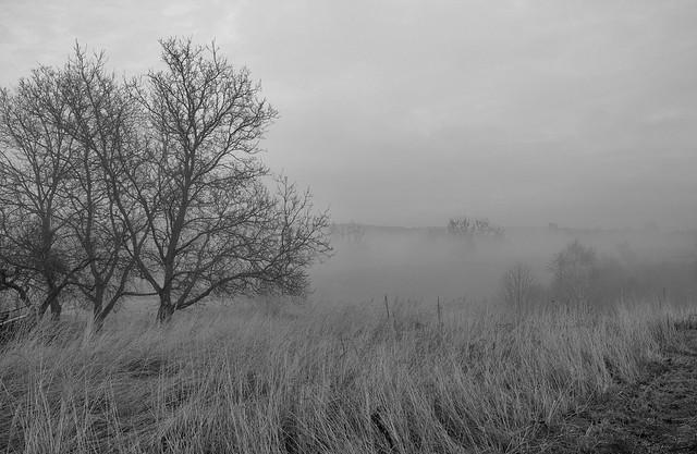Misty orchard, Fujifilm X-T1, XF18-55mmF2.8-4 R LM OIS