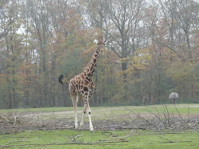 Safarianlage, Burgers Zoo