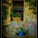 Tuscany_Fatoria San Donato_Italia