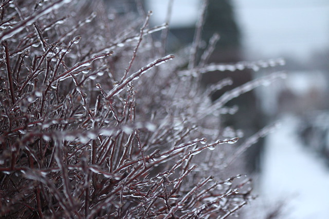 Ice Storm 2018, Canon EOS M, Canon EF-S 55-250mm f/4-5.6 IS II